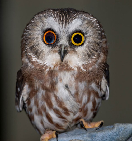 Cutest owl pictures impremedia 11 best images about owls on pinterest cute owl drawing couple and branches voltagebd Image collections